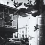 """OptykM """"Ulica czarnych ptaków"""" (2013-04-07 00:52:11) komentarzy: 7, ostatni: ciekawe, chociaż osobiście nie jestem do końca przekonany. :)"""