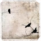 """Arek Kikulski """"w oczekiwaniu...."""" (2013-04-09 18:35:18) komentarzy: 1, ostatni: okładka cd indie rocka jak nic ..."""