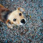 """OptykM """"Psie sztuczki ..."""" (2013-04-11 23:25:31) komentarzy: 14, ostatni: świetna psiunia :)"""