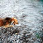 """OptykM """"Psie sztuczki ..."""" (2013-04-11 23:26:32) komentarzy: 5, ostatni: ...""""psowirówka""""... Fajne... Pozdrawiam"""