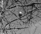 """Smokman """"Bądź jak orzeł co"""" (2013-04-14 12:37:16) komentarzy: 4, ostatni: kaczka ginie w badylach ...foto mało czytelne ... ja na nie"""