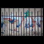 """Mieszko Pierwszy """"street art na uwięzi"""" (2013-04-15 18:12:17) komentarzy: 1, ostatni: Niebezpieczne obrazki trzymamy za kratą :)"""