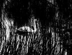 """Smokman """"ła w tarapa"""" (2013-04-19 21:28:48) komentarzy: 1, ostatni: Można zbesztać na maxa. Do suchej nitki. Ale mi się jakoś podoba ten przesadzony kontrast :P A może po prostu lubię łabędzie?"""
