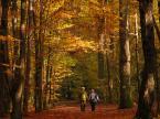 """Frąckiewicz """"jesienny spacer lub """"jesień życia"""" -  niżej komentarz"""" (2013-04-28 22:14:50) komentarzy: 21, ostatni: Pięknie"""