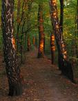 """Frąckiewicz """"promienisty las"""" (2013-05-04 19:44:50) komentarzy: 5, ostatni: dzięki za wizyte :)"""
