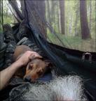 """Miras40 """"survival"""" (2013-05-11 19:42:18) komentarzy: 42, ostatni: o, w tym problem: cieszyły się stworzenia, że jeleń im się trafił a tu..., obca ekspansja!"""