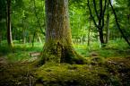 """Witold Andrzej Kulczycki """"New Forest - Brockenhurst 2"""" (2013-05-27 07:38:34) komentarzy: 0, ostatni:"""