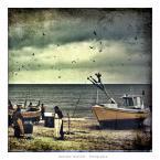 """papajedi """"czy w Bałtyku są langusty ?"""" (2013-06-11 19:42:43) komentarzy: 5, ostatni: db"""