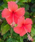 """jaroslaw-gogolin """"Kwiat2"""" (2013-06-11 20:52:32) komentarzy: 1, ostatni: odrobinę lepsze niż poprzednie ...ale też mz delete"""