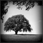 """slw """"""""Pod drzewem..."""" (2013-06-14 23:20:29) komentarzy: 7, ostatni: +/"""