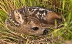 """meczata """"bambi:)"""" (2013-06-17 08:55:59) komentarzy: 18, ostatni: Słodki malec. Zazdroszczę spotkania."""