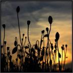 """Einsteiger """"***"""" (2013-06-18 23:04:38) komentarzy: 14, ostatni: Ładny obraz. Ramka """"pocztówkowa"""" - zbędna."""