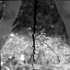 """silnik """"Rozerwanie Elwiry Moresko"""" (2013-07-02 06:53:08) komentarzy: 4, ostatni: Wstążeczka... Oj tam..."""