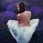 "fotoren ""Lavender..."" (2013-07-08 17:59:58) komentarzy: 8, ostatni: pięknie"