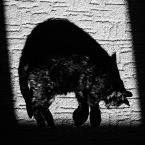 """Maciej Blum """"Na granicy świat(ł)a łowów"""" (2013-07-19 22:18:40) komentarzy: 17, ostatni: bdb.,"""