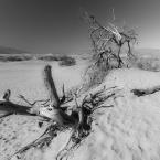 """rzolau """"Desert Tree"""" (2013-07-25 19:02:46) komentarzy: 1, ostatni: ładnie tam..."""