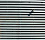 """JarekZ-68 """"... permanentna inwigilacja ..."""" (2013-09-15 12:16:20) komentarzy: 12, ostatni: ... Maciej, a po scrolluj sobie trochę, zobaczysz jak daje po oczach ;) Dzięki że się tak spodobało :)"""
