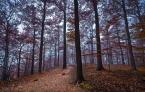 """Bonnie & Clyde """"Autumn Tones II"""" (2013-09-19 20:44:48) komentarzy: 3, ostatni: W Karkonoszach już taka jesień?"""