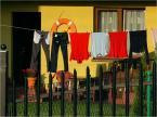 """Lusy """"pranie ratownika"""" (2013-10-07 22:00:21) komentarzy: 3, ostatni: jest i pranko i ratunek w kole... :)"""