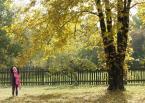 """dreptaq """"jesień już"""" (2013-10-12 19:26:32) komentarzy: 1, ostatni: Takie zwyczajne, wcale nie najlepsze bo pstrykane do bólu te kolory,  ale chce się patrzeć  i się podoba."""