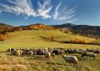 """prezes81 """"Jesień w Beskidach"""" (2013-10-13 19:45:34) komentarzy: 19, ostatni: być tam ,teraz, w jednej chwili..."""