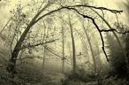 """scots """"las jesienny..."""" (2013-10-14 15:14:41) komentarzy: 5, ostatni: Niezwykły klimat"""