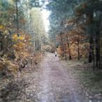 """j2p """"trochę jesieni"""" (2013-10-19 13:30:11) komentarzy: 3, ostatni: A dziękuję bardzo :)"""