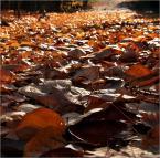 """barszczon """"""""... jesień idzie, nie ma na to rady..."""""""" (2013-10-20 18:31:18) komentarzy: 12, ostatni: dziękuję :)"""