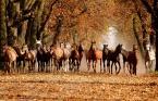 """asiasido """"Konie 1"""" (2013-10-21 22:45:06) komentarzy: 14, ostatni: +/"""