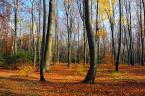 """Antoni Dziuban """"Jesień"""" (2013-10-23 10:59:00) komentarzy: 7, ostatni: Buki zapraszają do parku-lasu niczym brama jaka...:)"""
