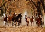 """asiasido """"Konie 2"""" (2013-10-23 19:56:50) komentarzy: 12, ostatni: ;)"""