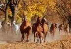 """asiasido """"Konie 3"""" (2013-10-25 18:03:42) komentarzy: 7, ostatni: Zaraz Cię stratują."""