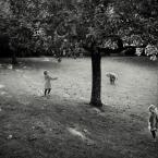 """slw """"Jesienne jabłuszka"""" (2013-10-28 18:40:13) komentarzy: 2, ostatni: """"gry i zabawy jesienne..."""""""