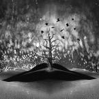 """Arek Kikulski """"..."""" (2013-10-30 20:05:44) komentarzy: 12, ostatni: od drzewa w dół widac klejenie , a ja nie chciałbym tego widziec ;) poza tym cienie nie grają jak należy, krawędzie ptaszków są za ostre . Kolaż z koncepcją  , ale słabe wykonanie . może będzie poprawka  ;)"""