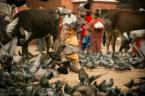 """wlamparski """"dalej w zamęcie Katmandu"""" (2013-11-23 08:46:54) komentarzy: 4, ostatni: świetne zdjęcie!!!"""
