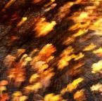 """asiasido """"Listopadowe impresje 2"""" (2013-11-28 20:51:37) komentarzy: 7, ostatni: ciepły jesienny wiatr"""