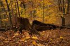 """mysliciel """""""" (2013-12-13 23:00:02) komentarzy: 1, ostatni: Lasek Bielański to dla mnie miłe wspomnienia, piękne zdjęcie i w moim guście."""