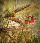 """dreptaq """"chleb"""" (2013-12-23 22:29:38) komentarzy: 5, ostatni: a dlaczego nie, he he he:)))"""