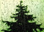 """wass """"Radosnych życzę:)"""" (2013-12-24 11:19:30) komentarzy: 9, ostatni: mimo deszczu i wiatru-niech te Święta będą radosne"""