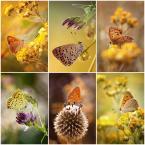 """mycatherina """"Motylarnia"""" (2014-01-21 11:11:51) komentarzy: 18, ostatni: piękne"""