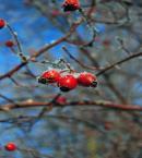 """Jorguś """"zima"""" (2014-01-26 11:50:37) komentarzy: 2, ostatni: to nie bardzo"""