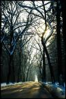"""dreptaq """"zimOWO"""" (2014-01-26 23:05:13) komentarzy: 5, ostatni: jest klimat jest światło nawet kolorki są żywe naturalne w lekkim błękicie śniek jest fajny przecież nie zawsze musi być biały:)"""
