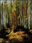 """BALTORO """"śnił  się  lasom  las"""" (2014-02-03 14:37:15) komentarzy: 5, ostatni: Kwadrat też byłby dobry ;-). I oczywiście dobre jest."""