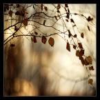 """matyldaW """""""" (2014-02-22 02:42:55) komentarzy: 29, ostatni: I tu przekonuję się kolejny raz, że jesień jest najpiękniejsza :)"""