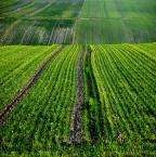 """asiasido """"Zielone pola"""" (2014-03-06 18:40:49) komentarzy: 5, ostatni: soczyste"""