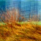 """monavida """"w chaszczach"""" (2014-03-20 14:48:09) komentarzy: 3, ostatni: Rozpalone ujęcie. Bardzo ładnie posługujesz się pędzlem wrażeń."""