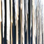 """asiasido """"Aleja klonowa"""" (2014-03-31 19:33:30) komentarzy: 18, ostatni: to naprawdę aleja klonowa w Złotym Potoku, godzina ok. 18ta, słońce zachodziło; machając pionowo taki efekt wyszedł. Częściowo zamierzony, częściowo przypadkowy. Mnie tu bardzo pasuje zestaw kolorystyczny, ot sztuka dla sztuki, ale chyba już o tym..."""