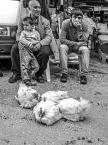 """sandiego """"oczekiwanie..."""" (2014-04-05 21:15:21) komentarzy: 7, ostatni: a to Turcja sądząc po gatunku kury :)"""