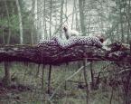 """jolka630 """"Safari"""" (2014-04-12 17:10:53) komentarzy: 15, ostatni: ... na łonie przyrody wszystko smakuje zdecydowanie lepiej :-)))"""