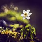 """Arek Kikulski """"wiosna"""" (2014-04-13 13:18:08) komentarzy: 4, ostatni: ładnie"""